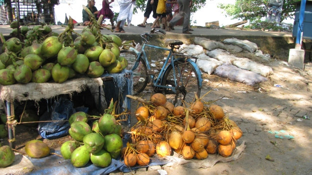 Bicycles and coconuts everywhere