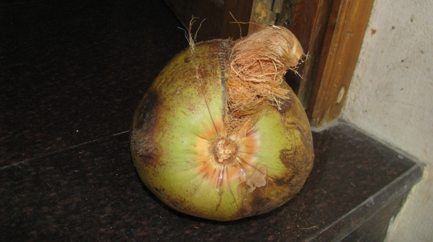 coconut 6