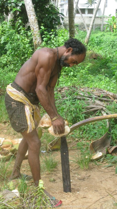 Removing the protective husks of a coconut the efficient way...