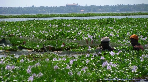 Fishing in backwaters of Kumarakom