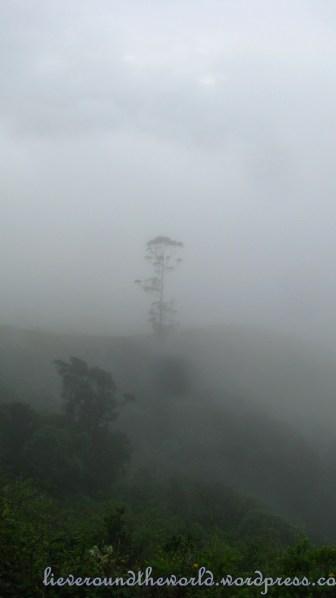 misty munnar 1